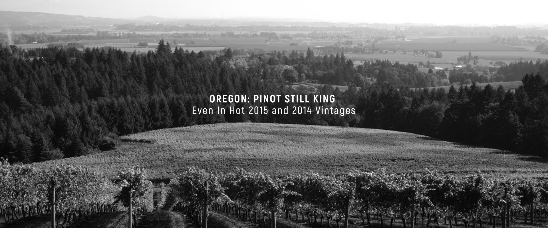 Can not ratings pinot noir vintage oregon opinion you