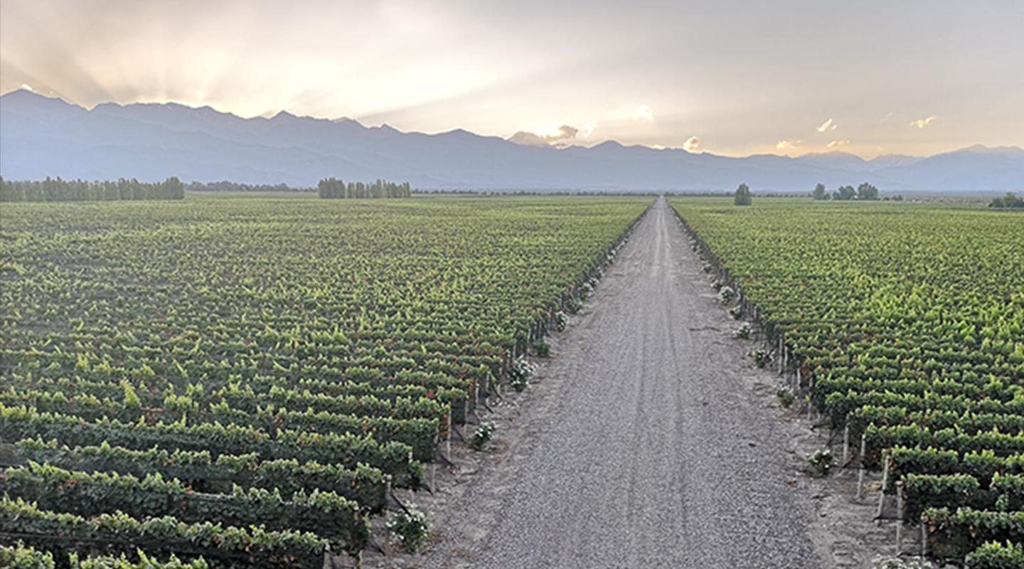 Argentina S Extreme Wines Lead The Way In This Year S